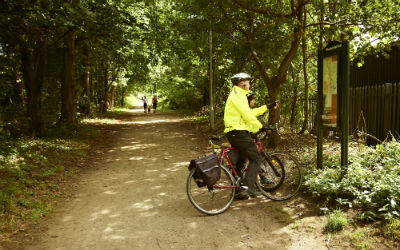 A cyclist reads a map in the woodland